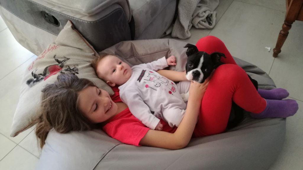 Bébé boston terrier